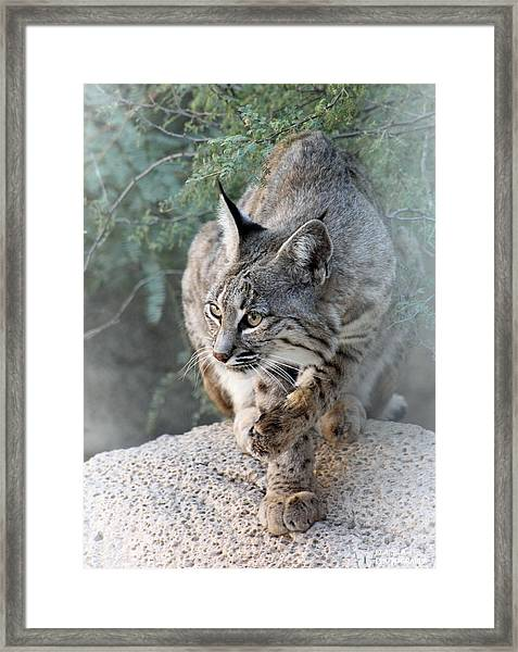 I Was Grooming Framed Print