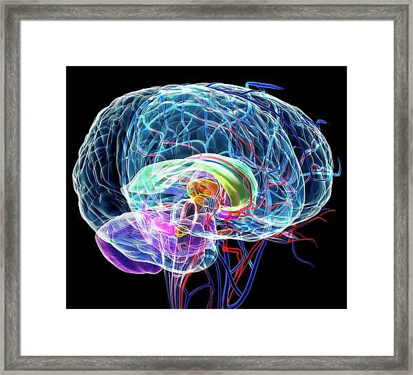 Brain Anatomy Framed Print