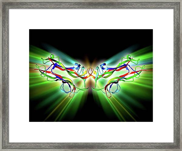 Brain-derived Neurotrophic Factor Framed Print