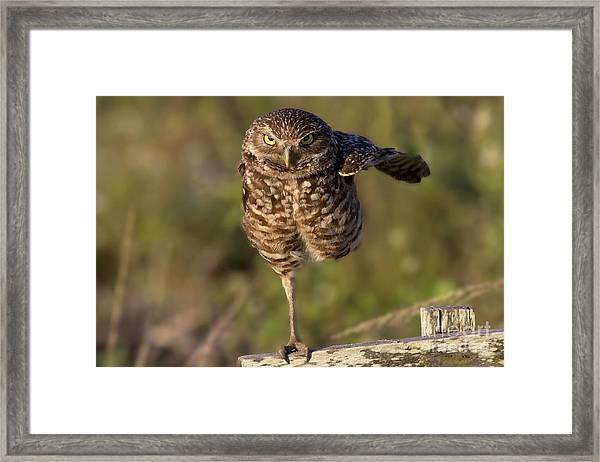 Burrowing Owl Photograph Framed Print