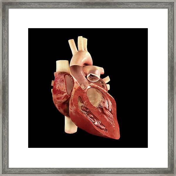 Cardiac Cycle Framed Print