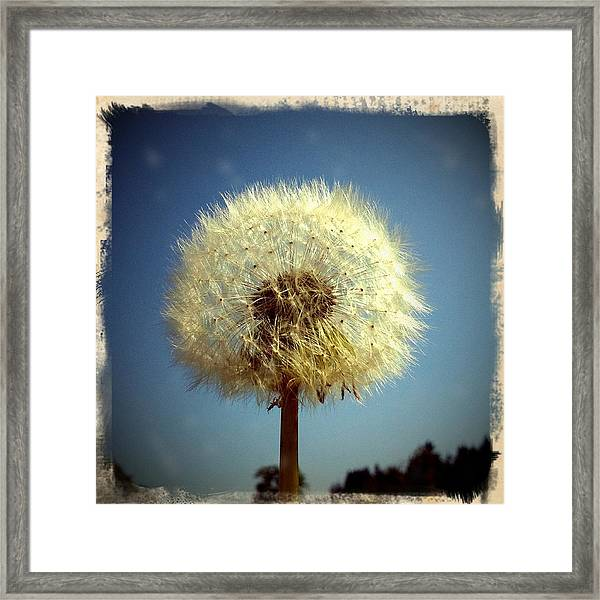 Dandelion And Blue Sky Framed Print