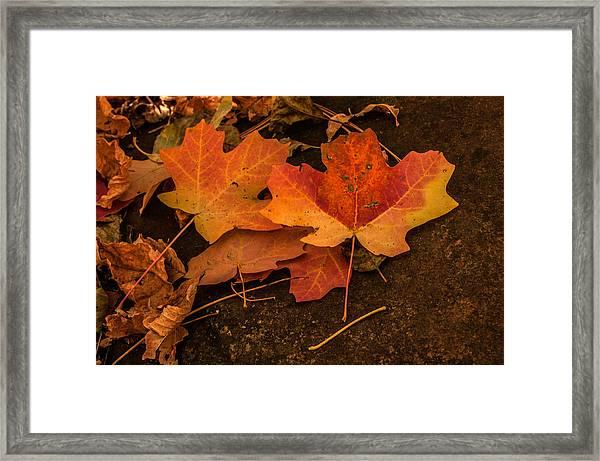 West Fork Fallen Leaves Framed Print