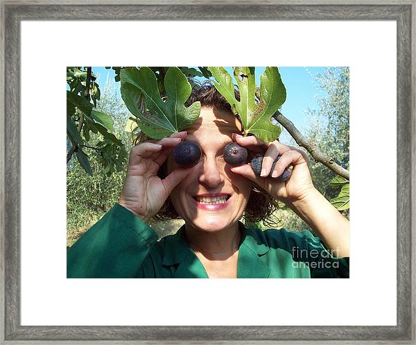 Fig's Harvest In Loppiano Framed Print