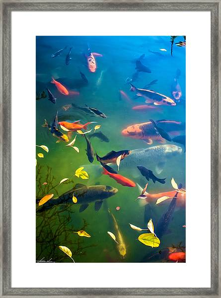 Fish Pond Framed Print