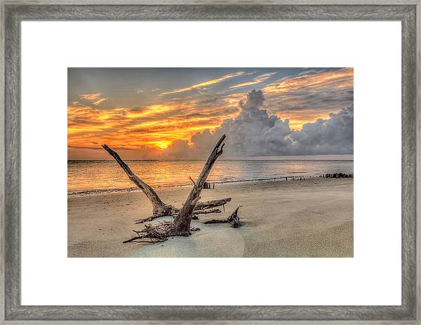 Folly Beach Driftwood Framed Print