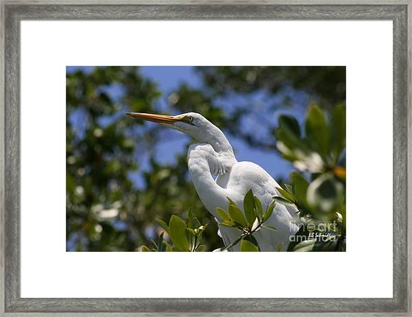 Great Egret 02 Framed Print