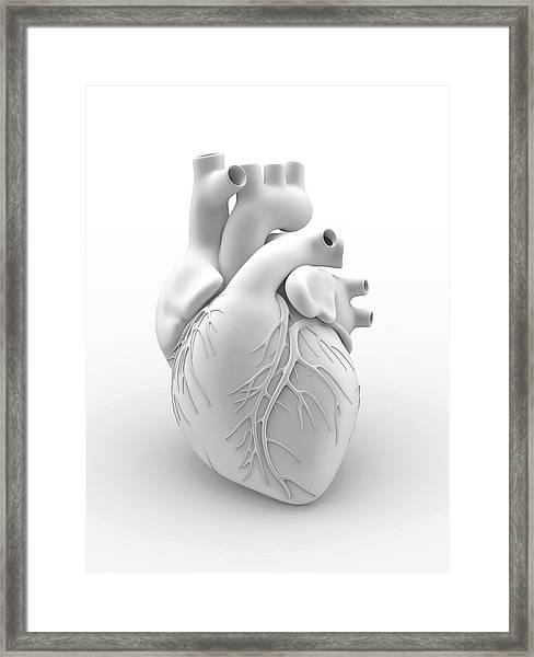 Heart And Coronary Arteries Framed Print