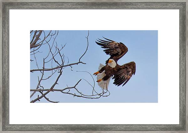 Heron Hunter Framed Print