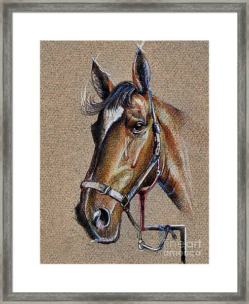 Horse Face - Drawing  Framed Print