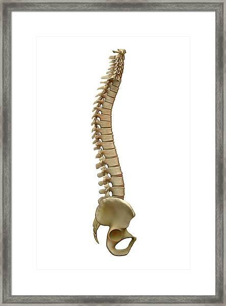 Human Backbone Framed Print