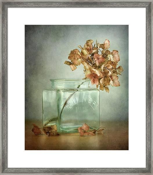 Hydrangea Framed Print by Mandy Disher