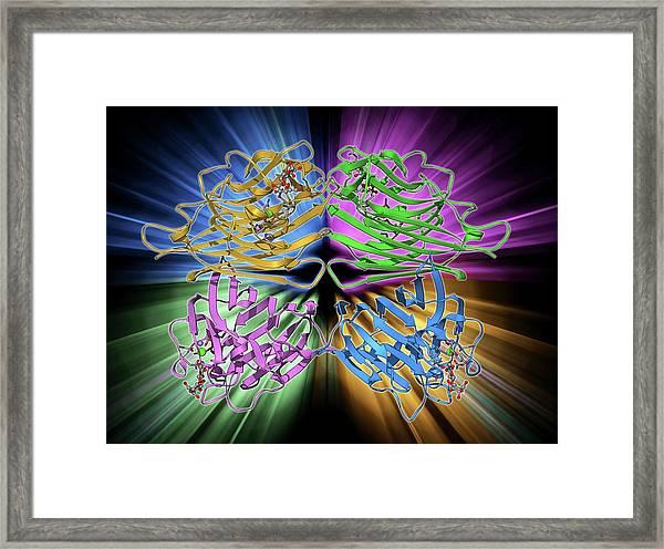 Lactose Binding Protein Molecule Framed Print
