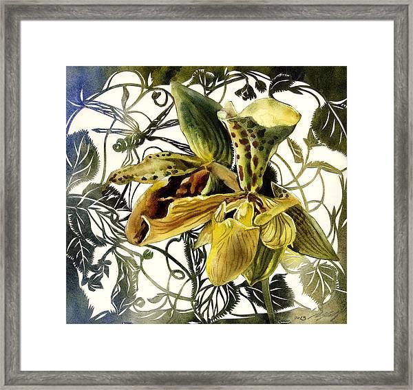 Ladyslipper Orchid Framed Print
