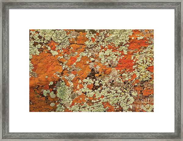 Framed Print featuring the photograph Lichen Abstract by Mae Wertz