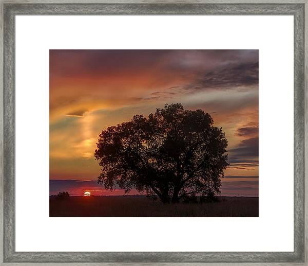 Light Pillar And Cottonwood Framed Print