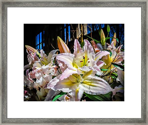 Lilies Out Of The Shadows Framed Print