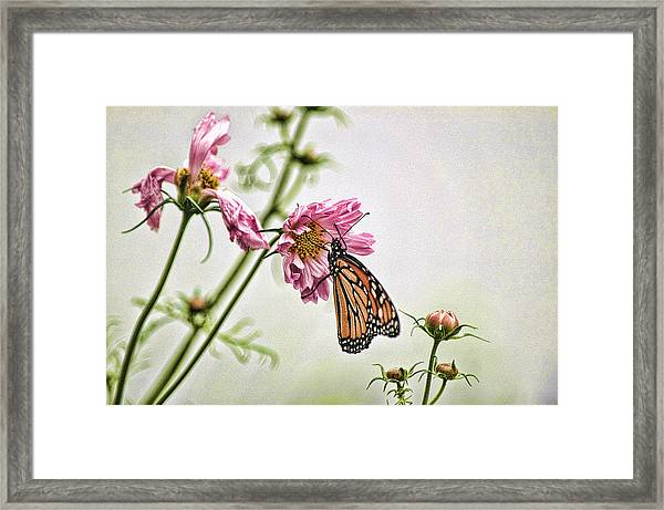 Framed Print featuring the photograph Monarch by David Armstrong
