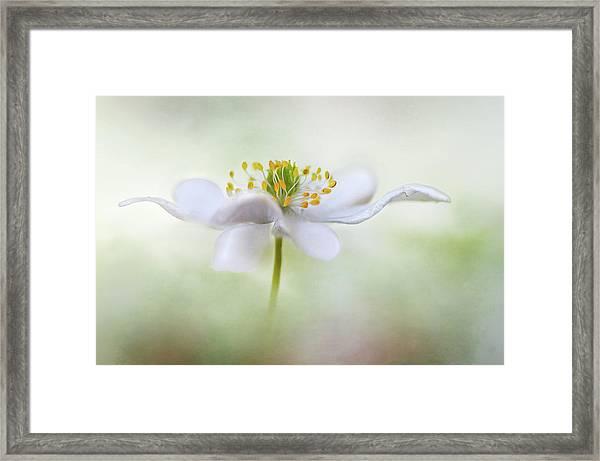 Nemorosa* Framed Print by Mandy Disher