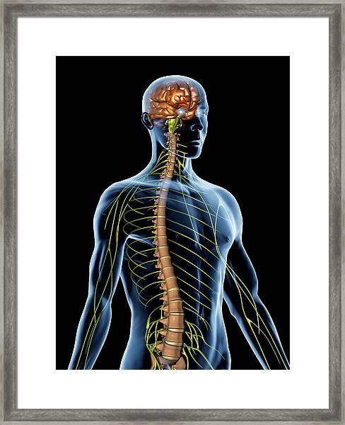 Nervous System Framed Print