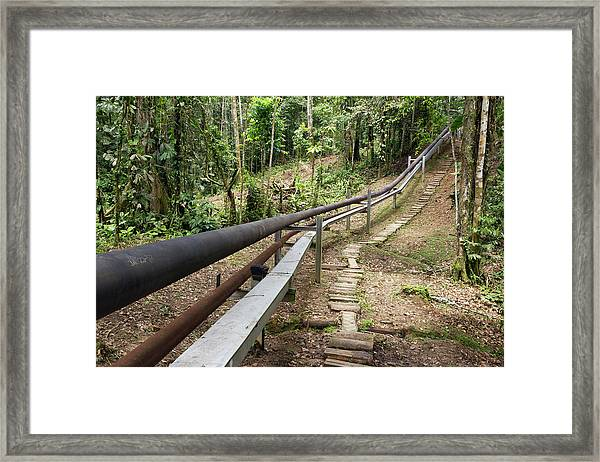 Oil Pipeline In Rainforest Framed Print