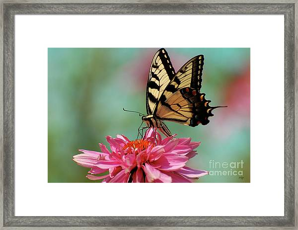 Framed Print featuring the photograph Pastel by Lois Bryan