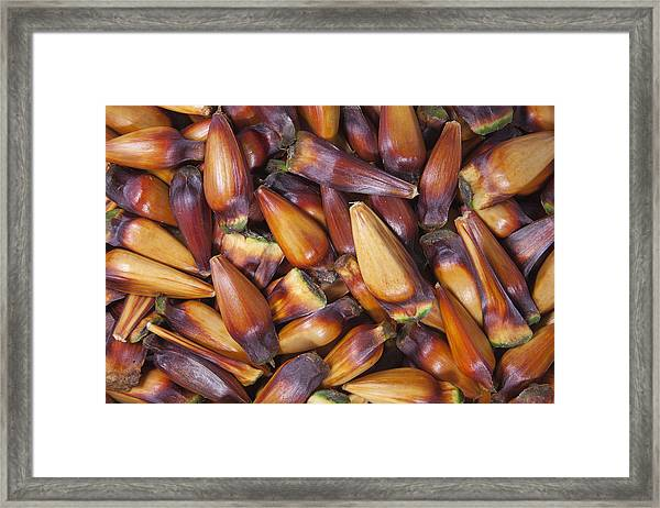 Pinhao Framed Print by Koepp Photography