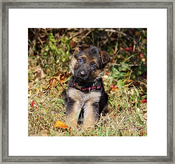 Pretty Puppy Framed Print
