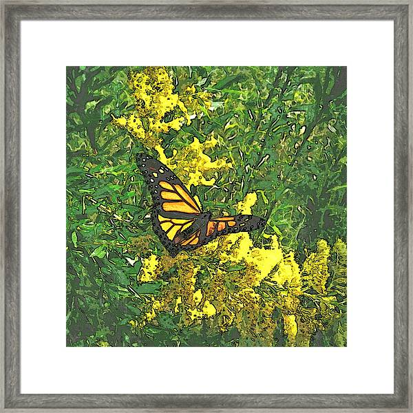 Royalty Framed Print