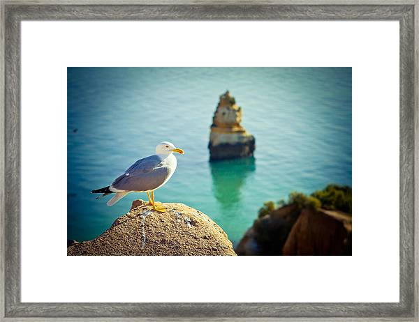 Framed Print featuring the photograph Seagull On The Rock by Raimond Klavins