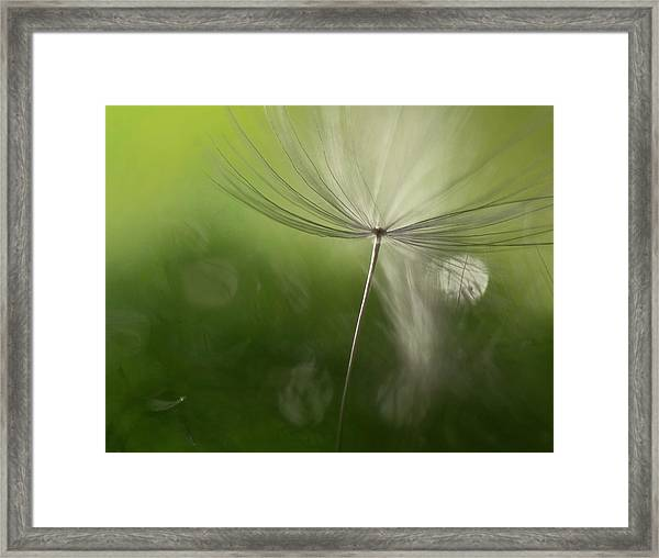 Shadows In The Green Framed Print