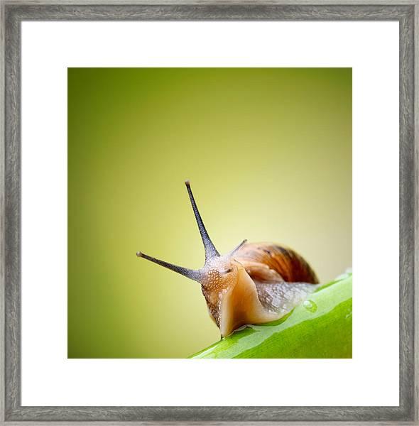 Snail On Green Stem Framed Print