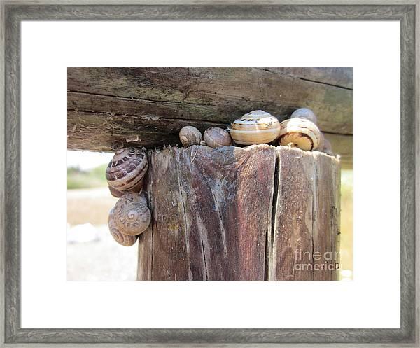 Snails Framed Print