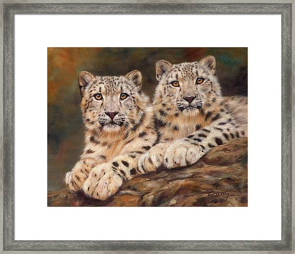 Snow Leopards Framed Print