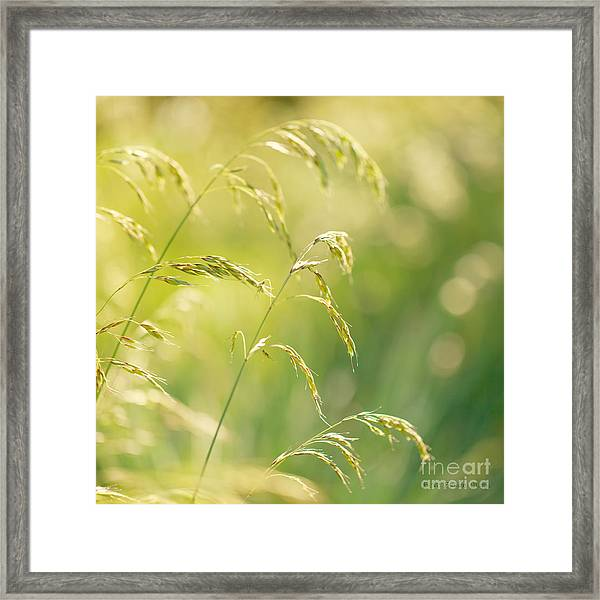 Those Were The Days Framed Print by Beve Brown-Clark Photography
