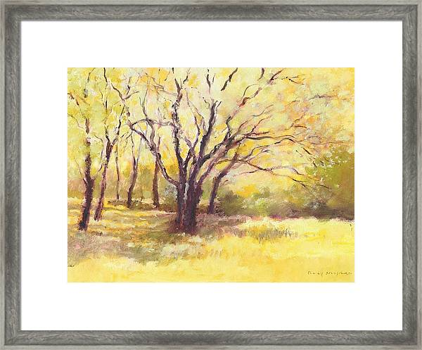 Trees2 Framed Print
