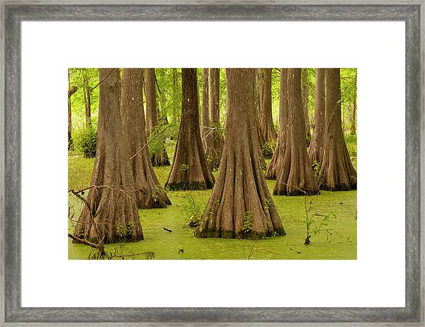Usa, Louisiana, Lake Martin Framed Print