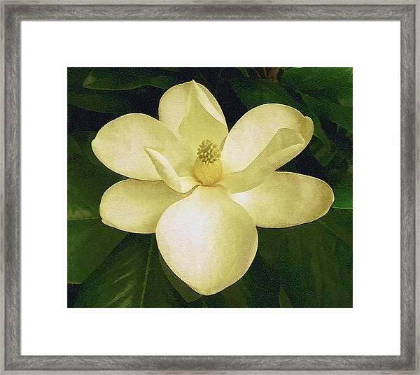 Vintage Magnolia Framed Print
