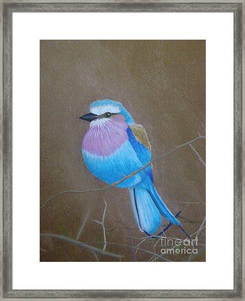 Violet-breasted Roller Bird Framed Print