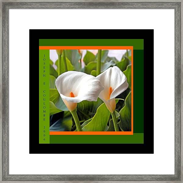 2 White Lily Flowers Framed Print