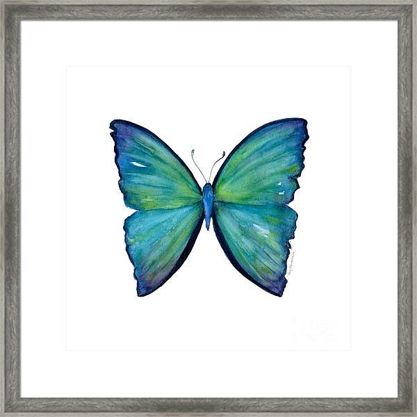 21 Blue Aega Butterfly Framed Print