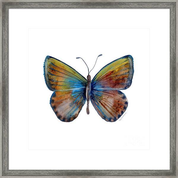 22 Clue Butterfly Framed Print