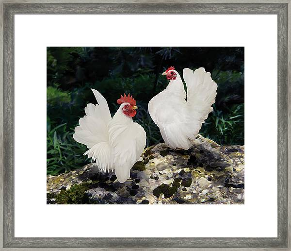 23. Pair White Serama Framed Print