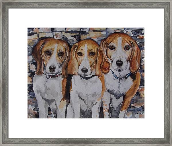 3 Amigo Beagles Framed Print