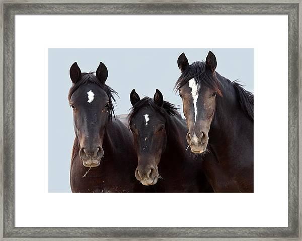 3 Amigos Wild Mustang Framed Print