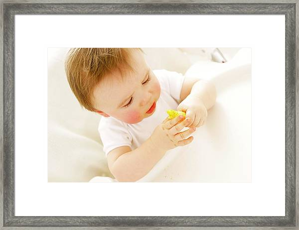 Baby Boy Eating A Crisp Framed Print by Ruth Jenkinson/science Photo Library