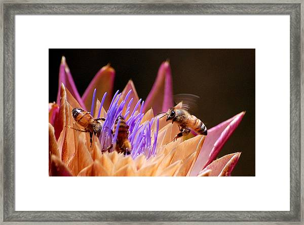 Bees In The Artichoke Framed Print