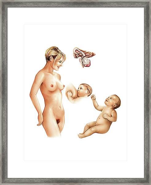 Breastfeeding Framed Print by Asklepios Medical Atlas
