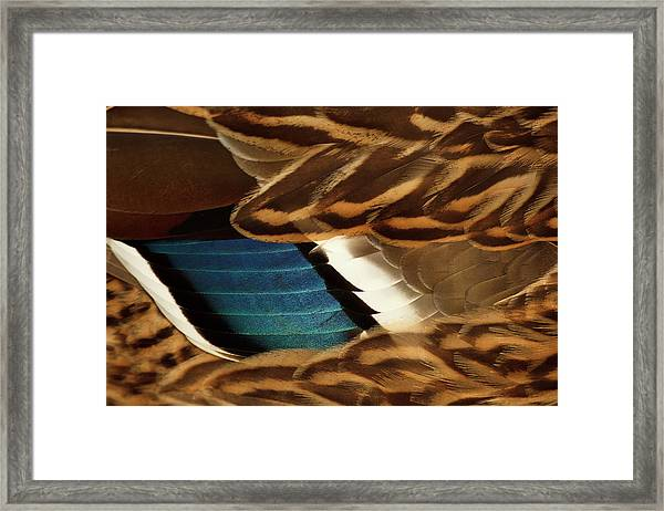Canada, British Columbia, George C Framed Print by Rick A Brown