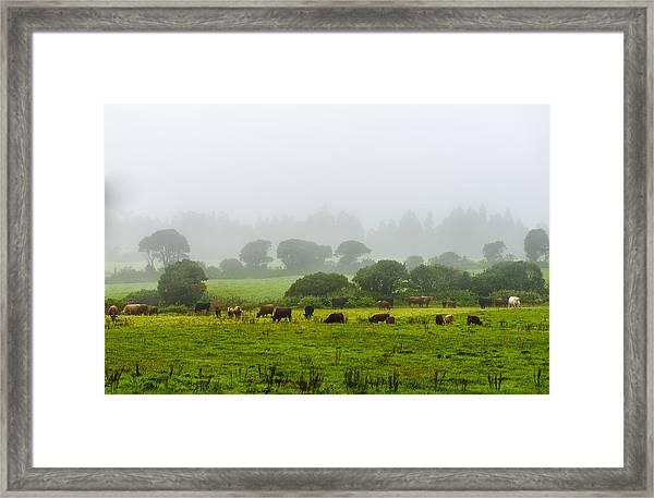 Cows At Rest Framed Print
